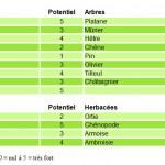 Allergies : gare aux pollens !