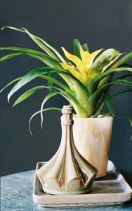 guzmania la plante id ale pour votre cuisine ou votre. Black Bedroom Furniture Sets. Home Design Ideas