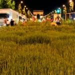 Nature Capitale : qui paie pour que les Champs Elysées deviennent verts ?