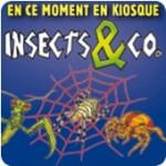Halloween : 20 insectes répugnants pour jouer à se faire peur