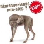 La peau de votre chien est irritée ? Essayez de changer sa nourriture