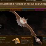 Biodiversité : 2011, l'année internationale de la chauve-souris