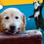 Départ en vacances : comment emmener son chien ou son chat en voyage, où le laisser en pension ?