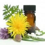 Médicaments à base de plantes : l'UE veut des produits «plus sûrs»
