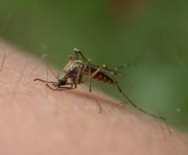 Journée mondiale de lutte contre le paludisme, le 25 avril 2014