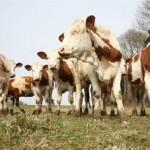 Découvrez les coulisses du lait bio