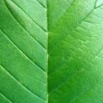 Plantes dépolluantes : l'aération et la ventilation «restent bien plus efficaces», estime l'Ademe