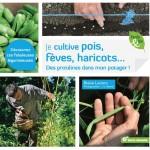Je cultive pois, fèves, haricots : des protéines dans mon jardin !