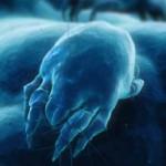 Acariens : un film en 3D sur « les envahisseurs » de notre quotidien