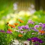 La phytothérapie en plein boom