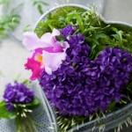 Un bouquet de Violettes à 200 euros