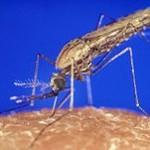 Journée mondiale de lutte contre le paludisme, le 25 avril 2015