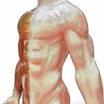 Les bienfaits de la musculation pour la santé