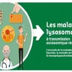 Un «e-guide» sur les maladies lysosomales à transmission autosomique récessive