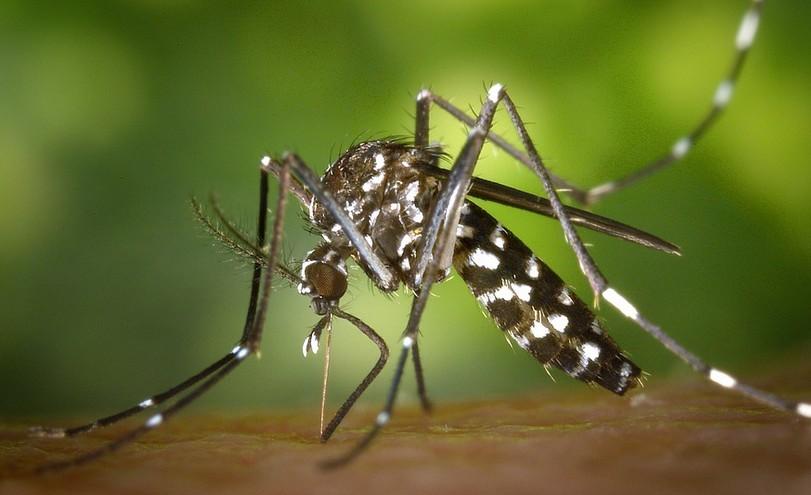 Épidémie de Zika : 5 voyageurs ayant contracté le virus rentrés en France