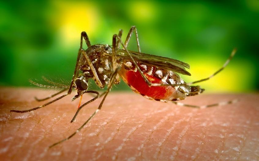 Virus Zika, maladie de Lyme : les Français craignent une propagation de ces affections