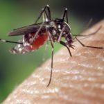 Paludisme : la lutte contre la maladie stagne dans le monde